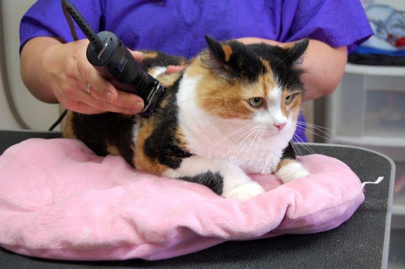 Подстричь кота в москве