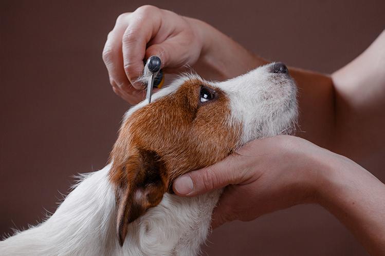 Тримминг собак в Лефортово